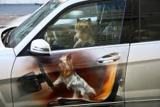 Mercedes Benz GLK - Аэрография собачка в окне